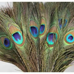 Peacock feather short